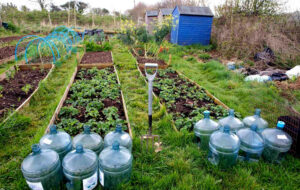 Tamar Grow Local - a social enterprise supporting local growing in the Tamar Valley